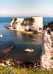 Handfast Point - Old Harry Rocks
